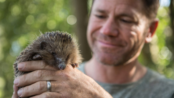 Tune In: Meet the Hedgehogs Premiering on WPT April 7